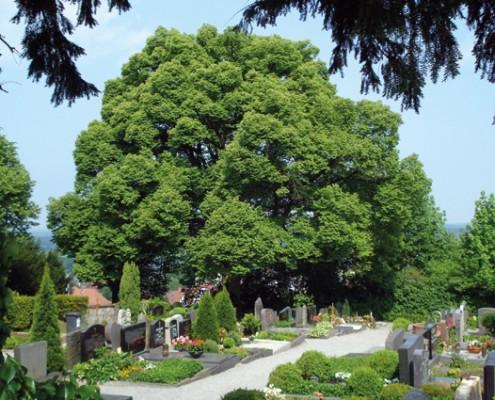 Friedhof Auerbach