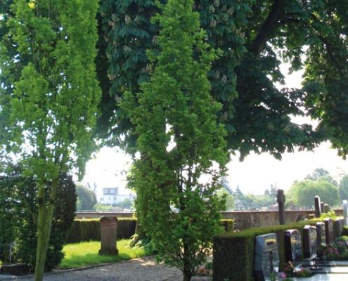 Friedhof Schwanheim